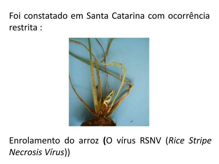 Foi constatado emSanta Catarina comocorrência restrita :