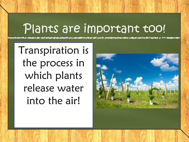 Plants are important too!