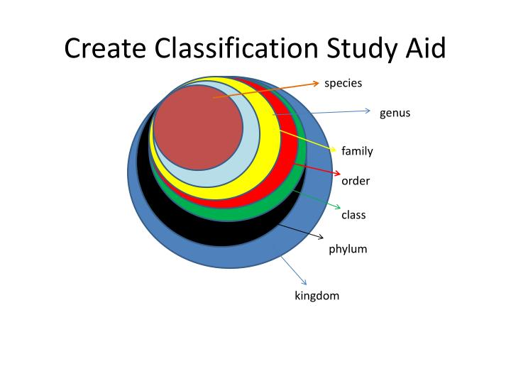 Create Classification Study Aid