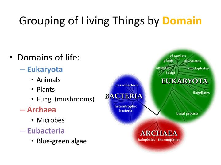 Grouping of living things by domain