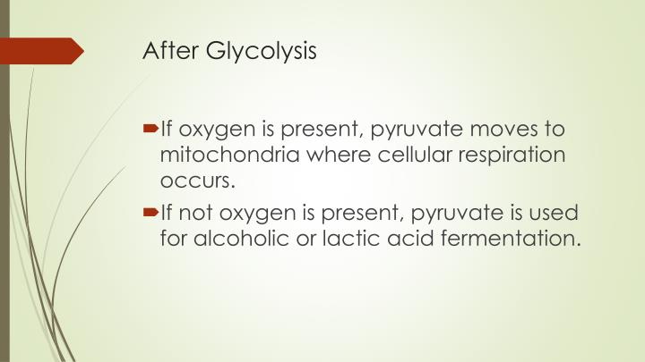 After Glycolysis