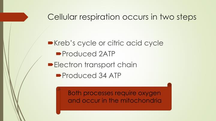 Cellular respiration occurs in two steps
