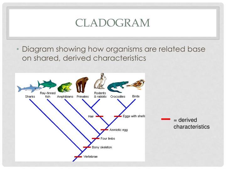 PPT - Cladistics PowerPoint Presentation - ID:2810306