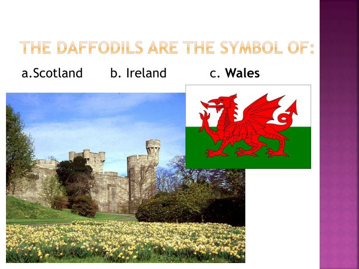 The daffodils are the symbol of: