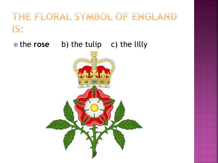 The floral symbol of England is: