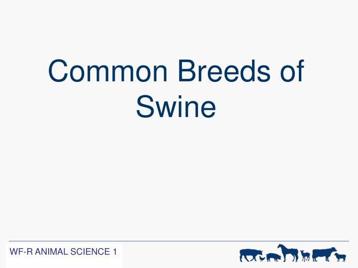 Common Breeds of Swine