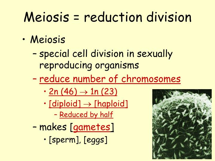 Meiosis = reduction division