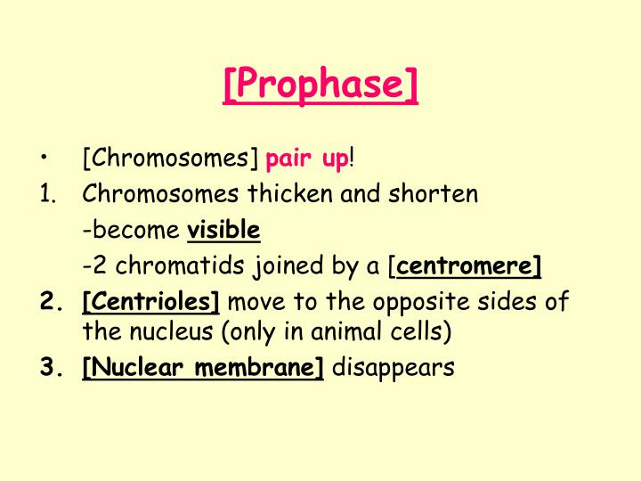 [Prophase]