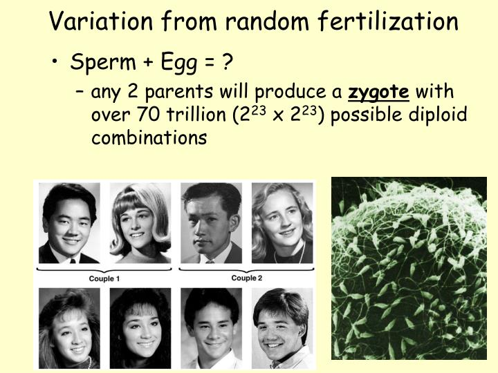 Variation from random fertilization