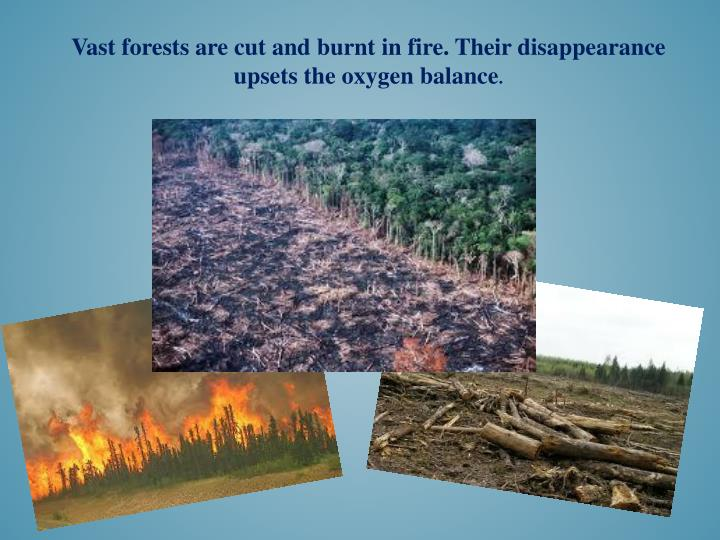 Vast forests are cut and
