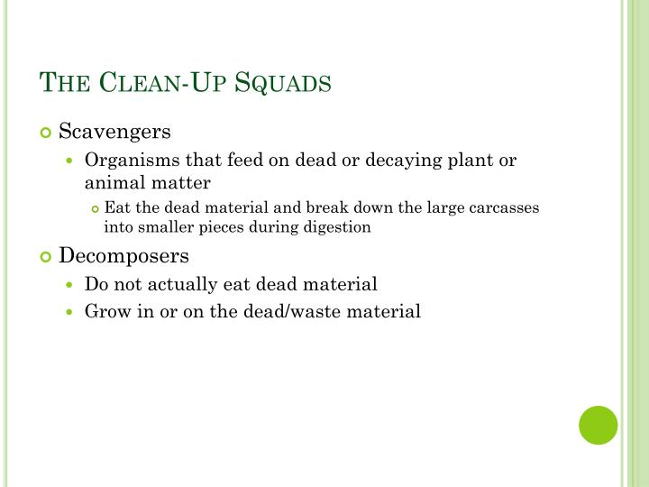 The Clean-Up Squads