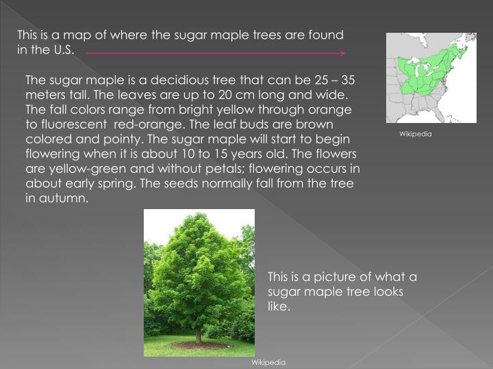 This is a map of where the sugar maple trees are found in the U.S.