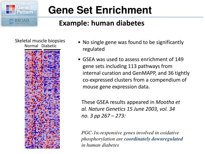 Gene Set Enrichment