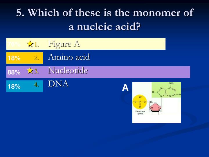 5. Which of these is the monomer of a nucleic acid?