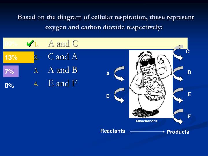 Based on the diagram of cellular respiration, these represent oxygen and carbon dioxide respectively: