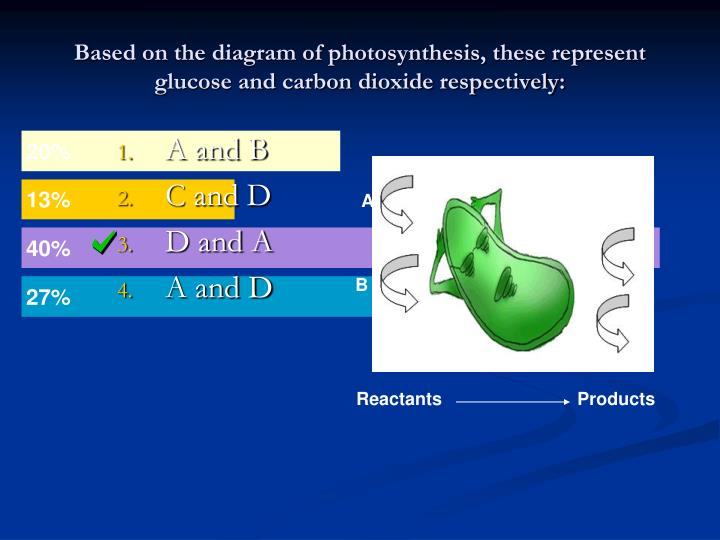 Based on the diagram of photosynthesis, these represent glucose and carbon dioxide respectively: