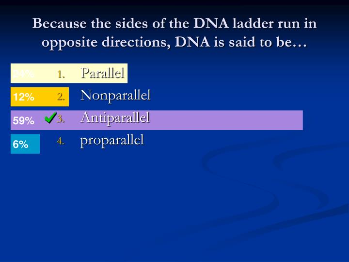 Because the sides of the DNA ladder run in opposite directions, DNA is said to be…