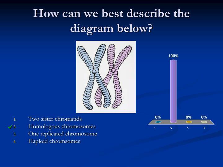 How can we best describe the diagram below?