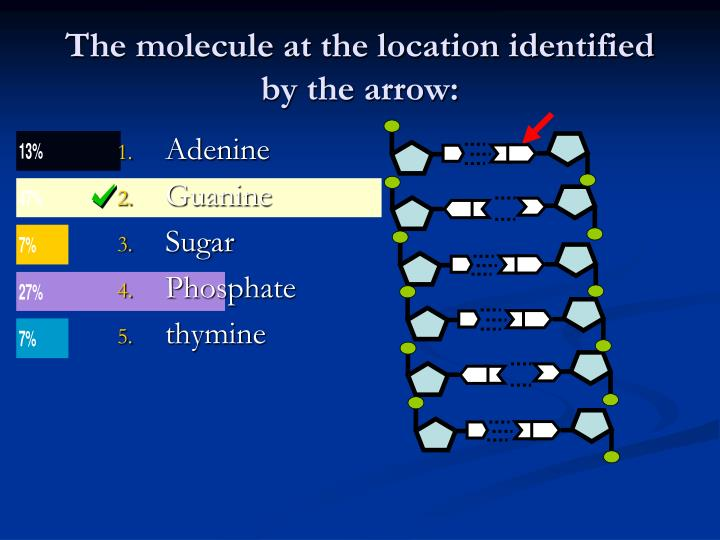 The molecule at the location identified by the arrow: