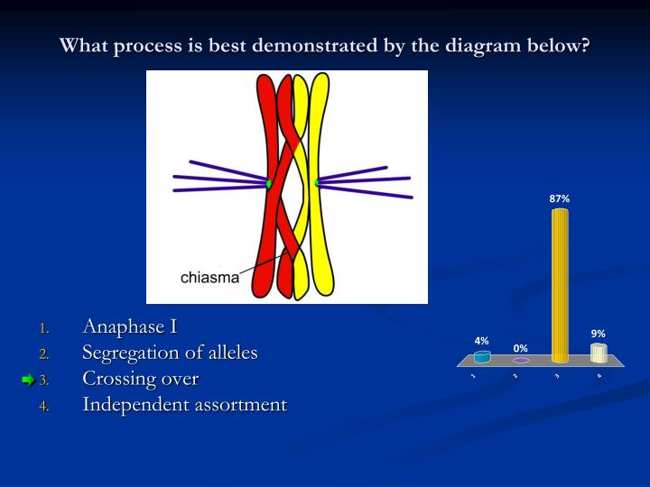 What process is best demonstrated by the diagram below?
