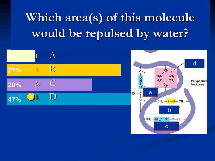 Which area(s) of this molecule would be repulsed by water?