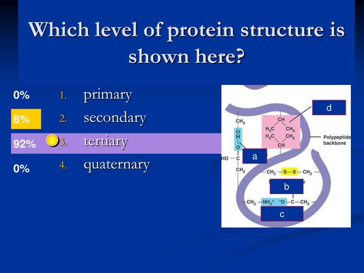 Which level of protein structure is shown here?