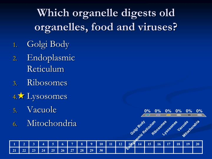 Which organelle digests old organelles, food and viruses?