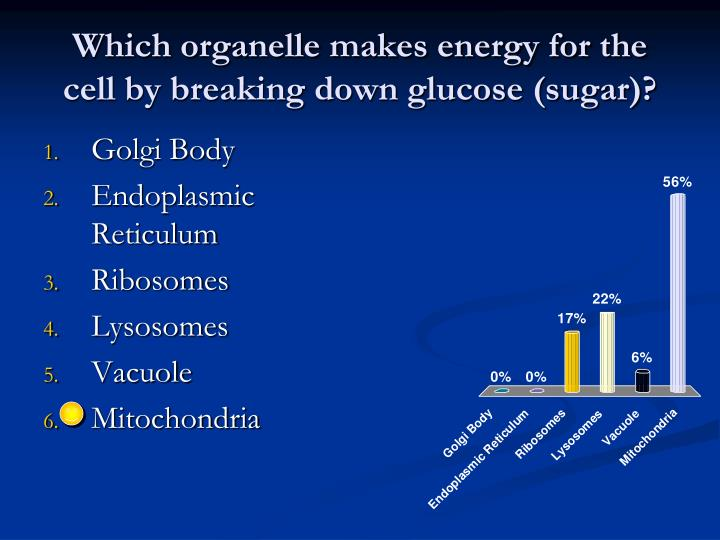 Which organelle makes energy for the cell by breaking down glucose (sugar)?