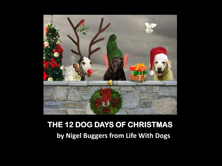 The 12 dog days of christmas