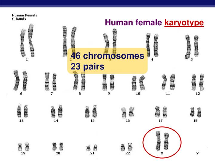 Human female