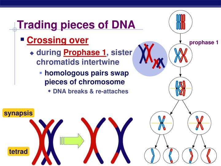 Trading pieces of DNA