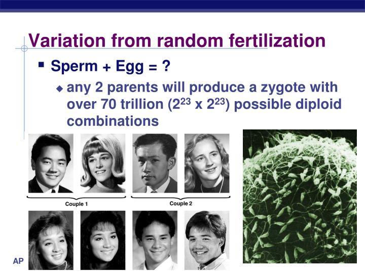 Variation from random fertilization