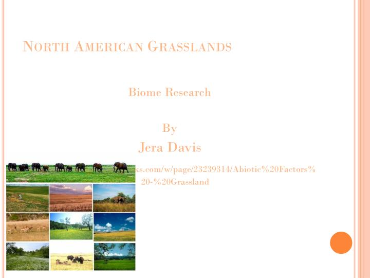 North american grasslands