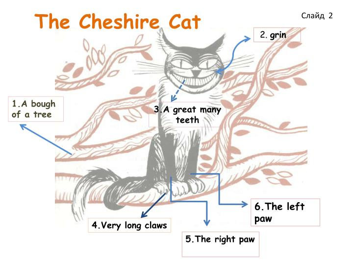 The cheshire cat1