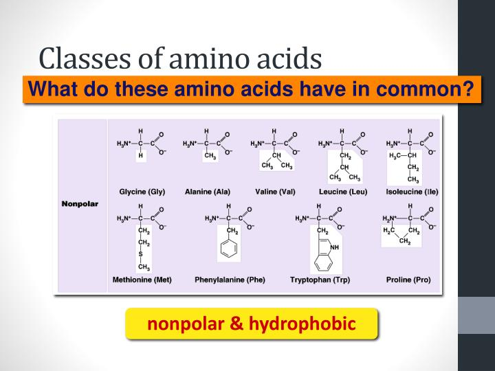Classes of amino acids