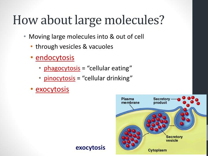 How about large molecules?