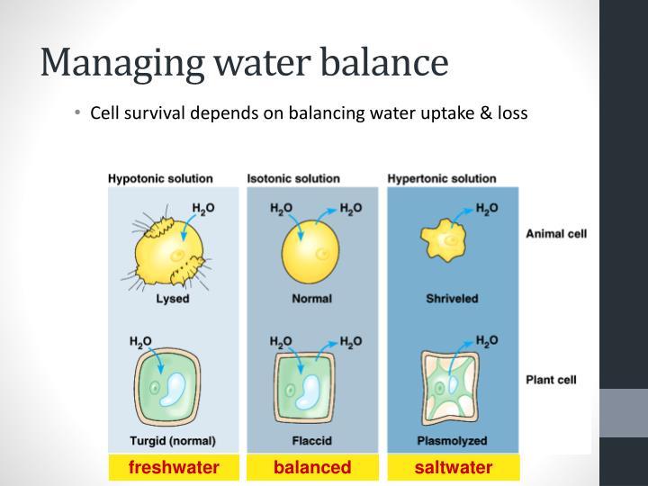 Managing water balance