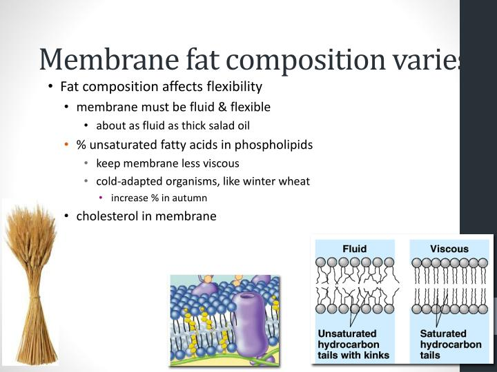 Membrane fat composition varies