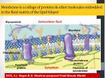 membrane is a collage of proteins other molecules embedded in the fluid matrix of the lipid bilayer