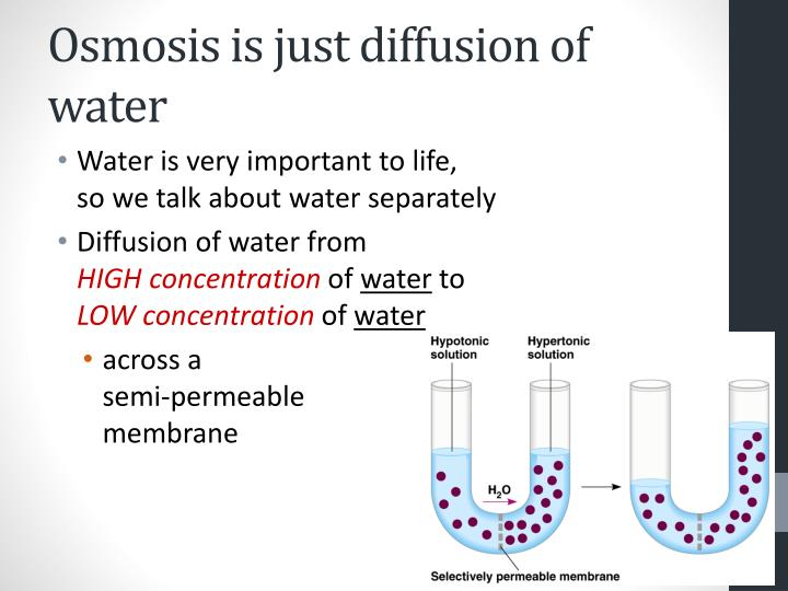 Osmosis is just diffusion of water