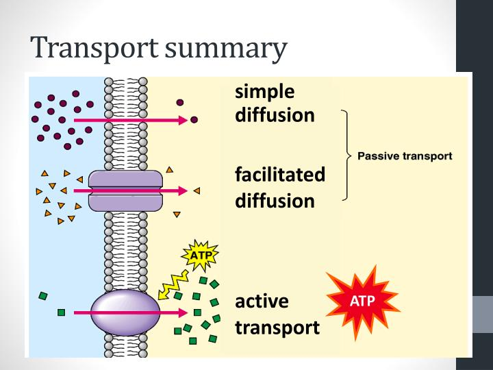 Transport summary