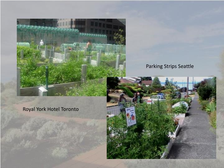 Parking Strips Seattle