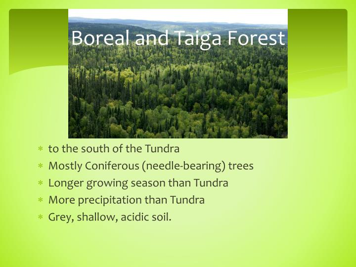 Boreal and Taiga Forest