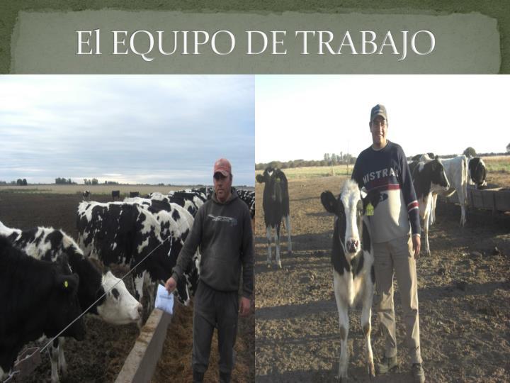 El EQUIPO DE TRABAJO