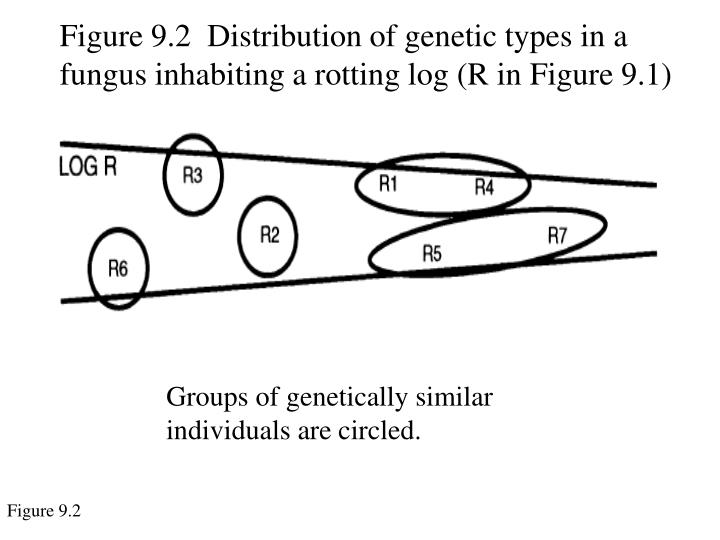 Figure 9.2  Distribution of genetic types in a fungus inhabiting a rotting log (R in Figure 9.1)