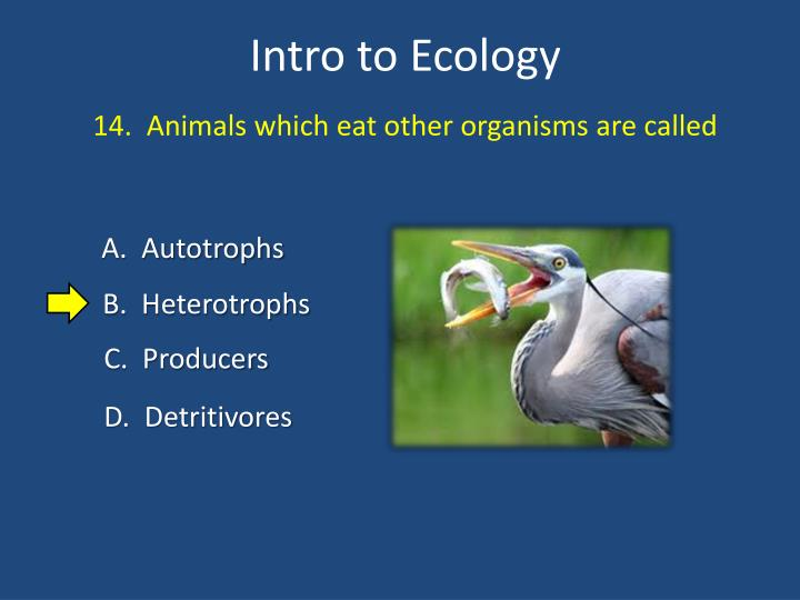 14.  Animals which eat other organisms are called