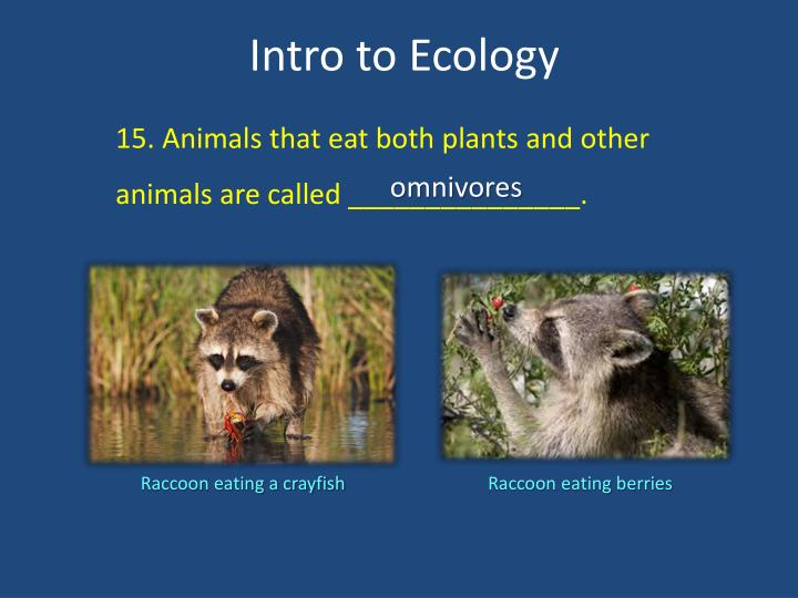 15. Animals that eat both plants and other animals are called _______________.