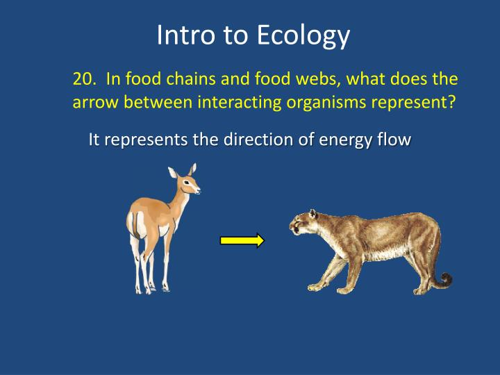 20.  In food chains and food webs, what does the arrow between interacting organisms represent?