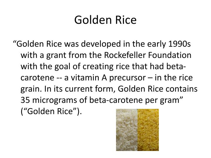 Golden rice1