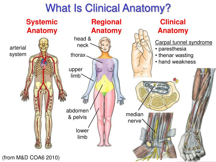 What Is Clinical Anatomy?